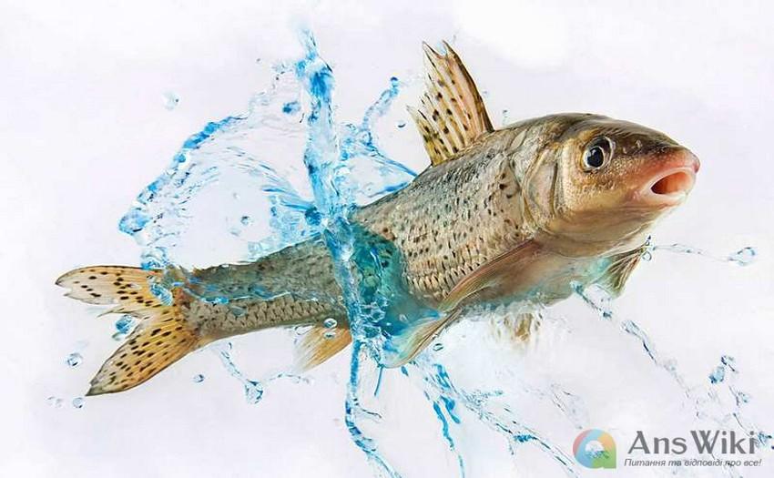 Сонник Риба На Гачку