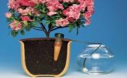 Як поливати кімнатні рослини, коли вас немає вдома?